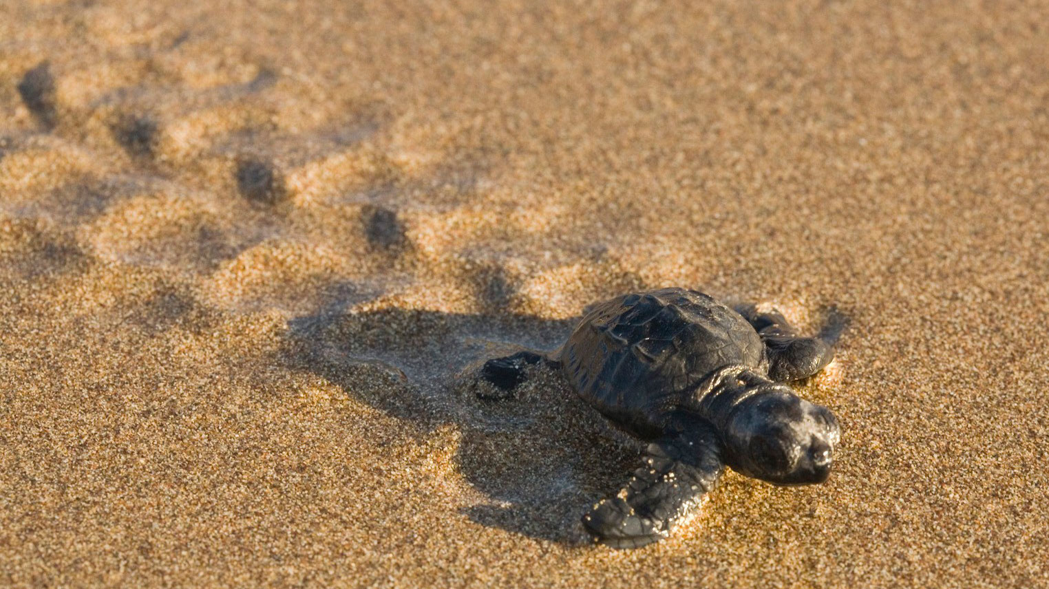 release-of-sea-turtles-in-puerto-vallarta